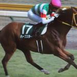 ハープスター・競走馬画像