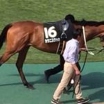 カウニスクッカ・馬の写真