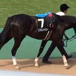エクセレントビュー・馬の写真