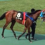 スーリール・競走馬画像
