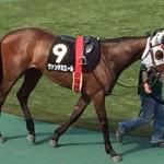 ヴァンデエミール・馬の写真