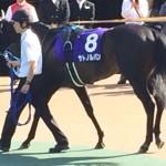 サトノルパン・馬の写真