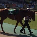 ゴールデンナンバー・競走馬画像