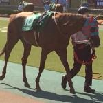タマモベストプレイ・馬の写真