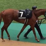 モグモグパクパク・競走馬画像