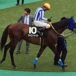 シャイニーリーヴァ・競走馬画像