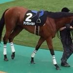 アンヴェイルド・馬の写真