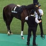 カレンケカリーナ・競走馬画像