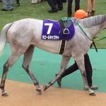 ホエールキャプチャ・馬の名前文字数