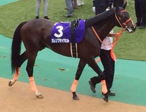 カレンブラックヒル・競走馬画像