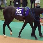 サダムパティック・競走馬画像