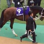 ダノンシャーク・競走馬画像