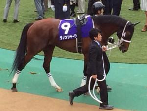 ダノンシャーク競走馬画像